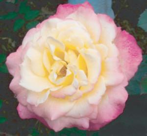 charlie-rose2