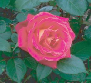 charlie-rose3